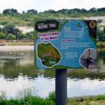 Explore the parks and lakes around Bluewater | Family things to do for free in Kent