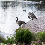 Explore the lakes and parkland around Bluewater | Family Things to do in Kent